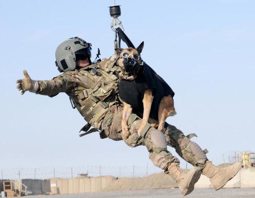 dog-training photo:rechargeable dog training collar