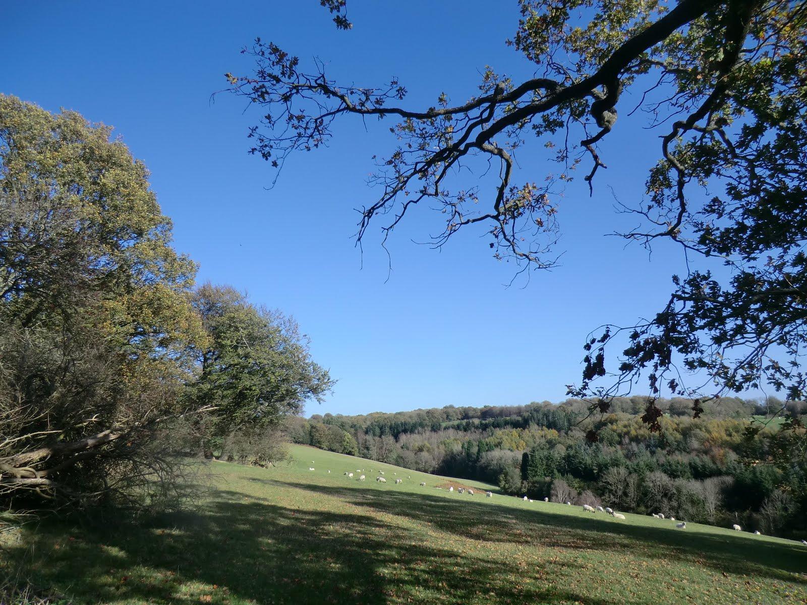 CIMG5229 Hillside path near Burrs Wood