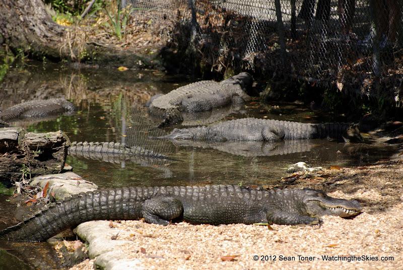 04-07-12 Homosassa Springs State Park - IMGP4522.JPG