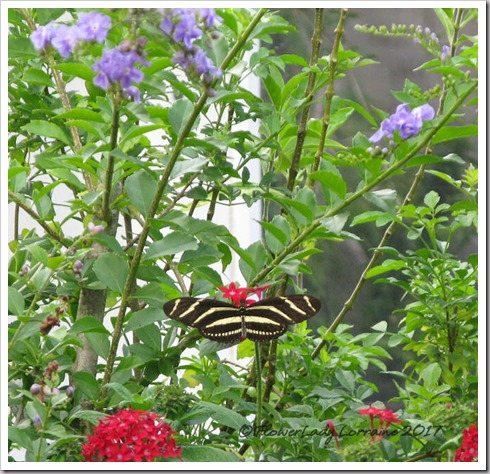 05-05-zebra