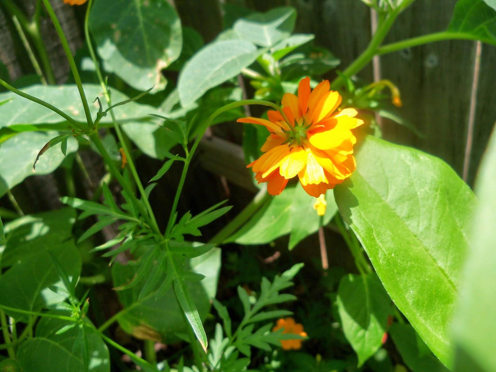Gardening 2014 - 116_2980.JPG