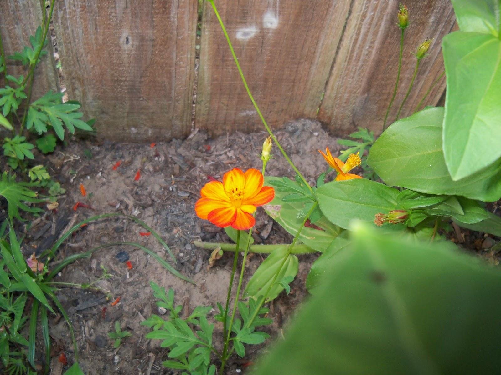 Gardening 2012 - 115_2050.JPG
