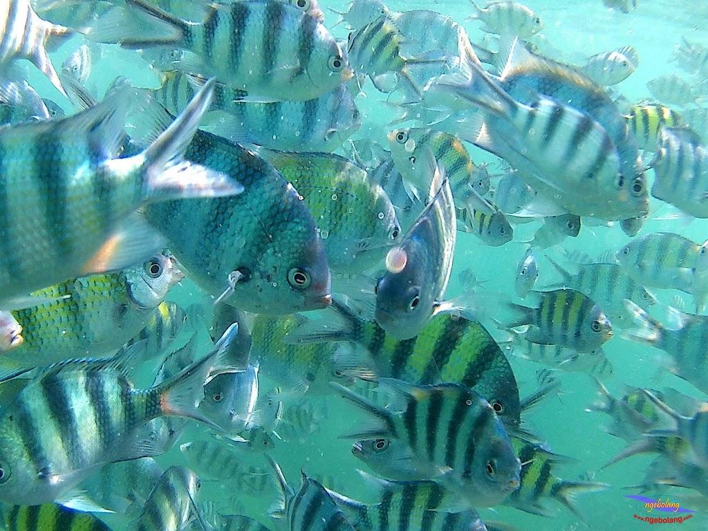 family trip pulau pari 140716 GoPro 27