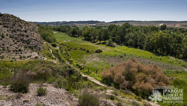 Bosque de ribera junto al Real Canal del Manzanares