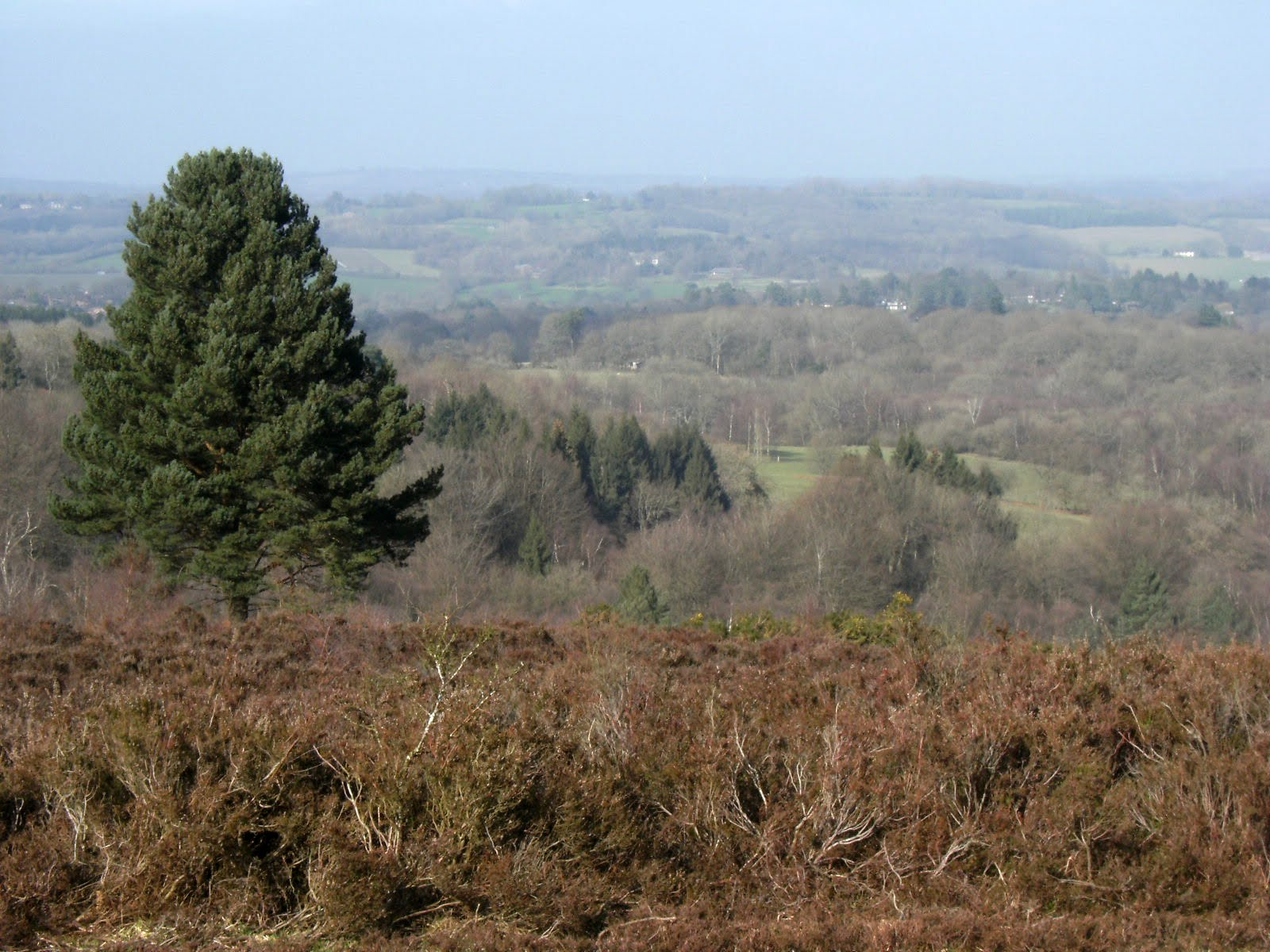 1103030051 View from Ashdown Forest