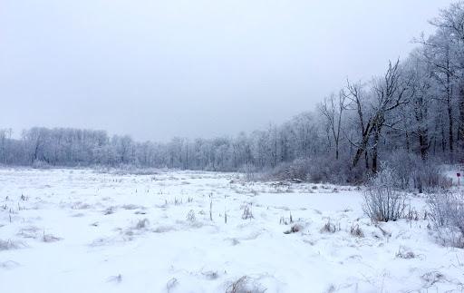 Frosty day!