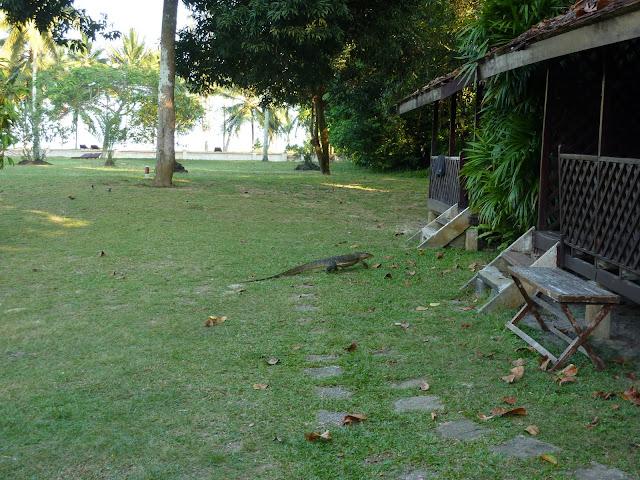 Blog de voyage-en-famille : Voyages en famille, Cherating, rythme tortue