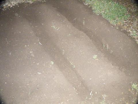 植え穴を掘り終わったら日が暮れてた