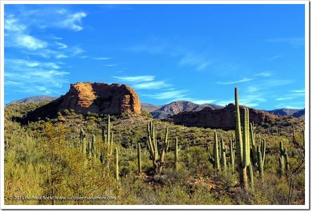 Arizona 2015—Phoenix teaser 2