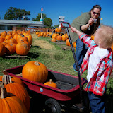 Pumpkin Patch - 115_8276.JPG