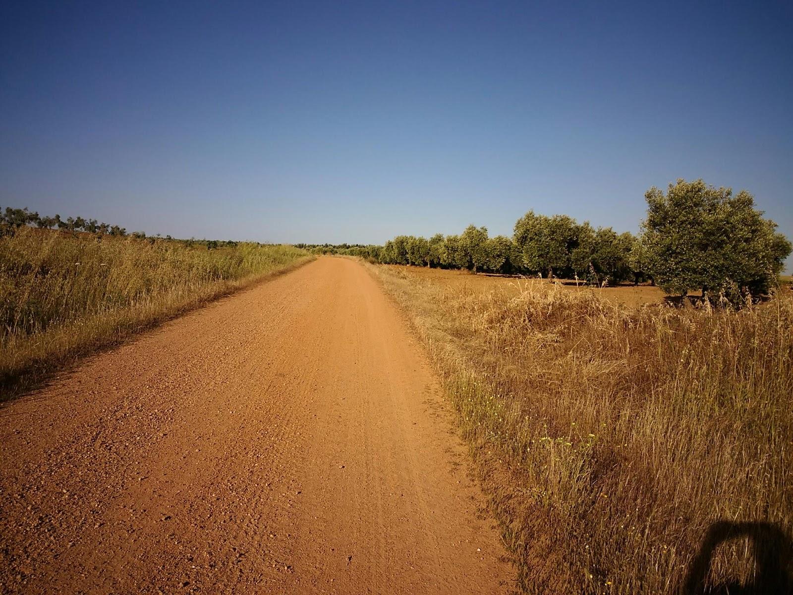 My camino de santiago