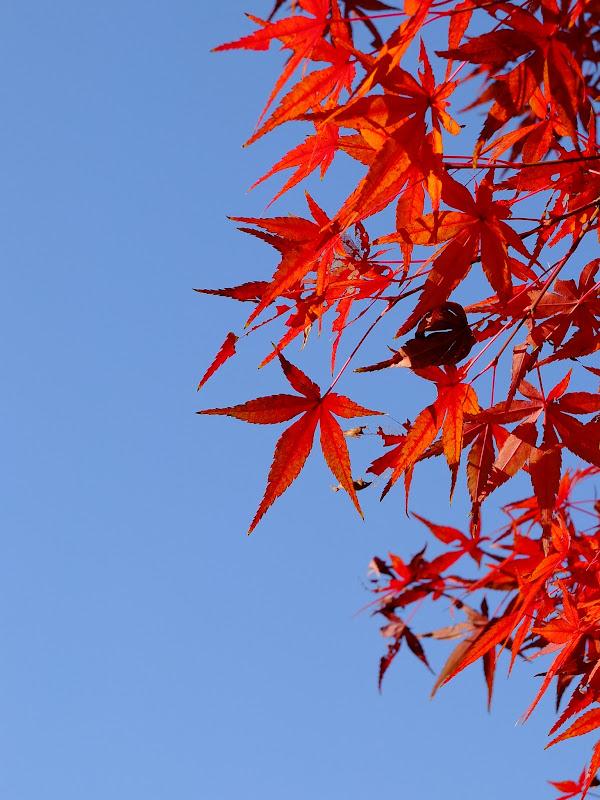värit puussa