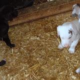 Serena & Jaspers 5-13-12 litter - SAM_3906.JPG