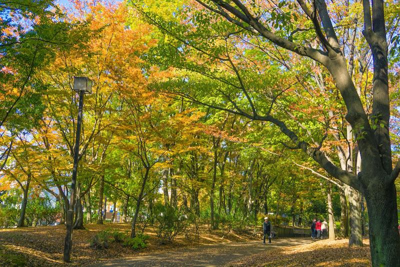 府中の森公園 紅葉 写真16