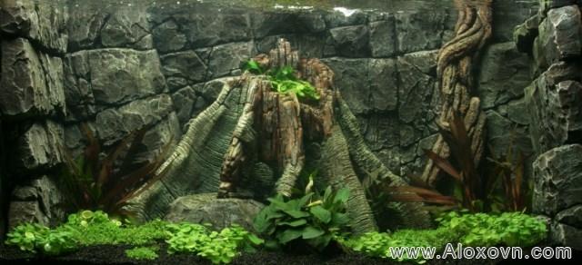 phông nền hồ cá rồng, phong nen ho ca canh 04