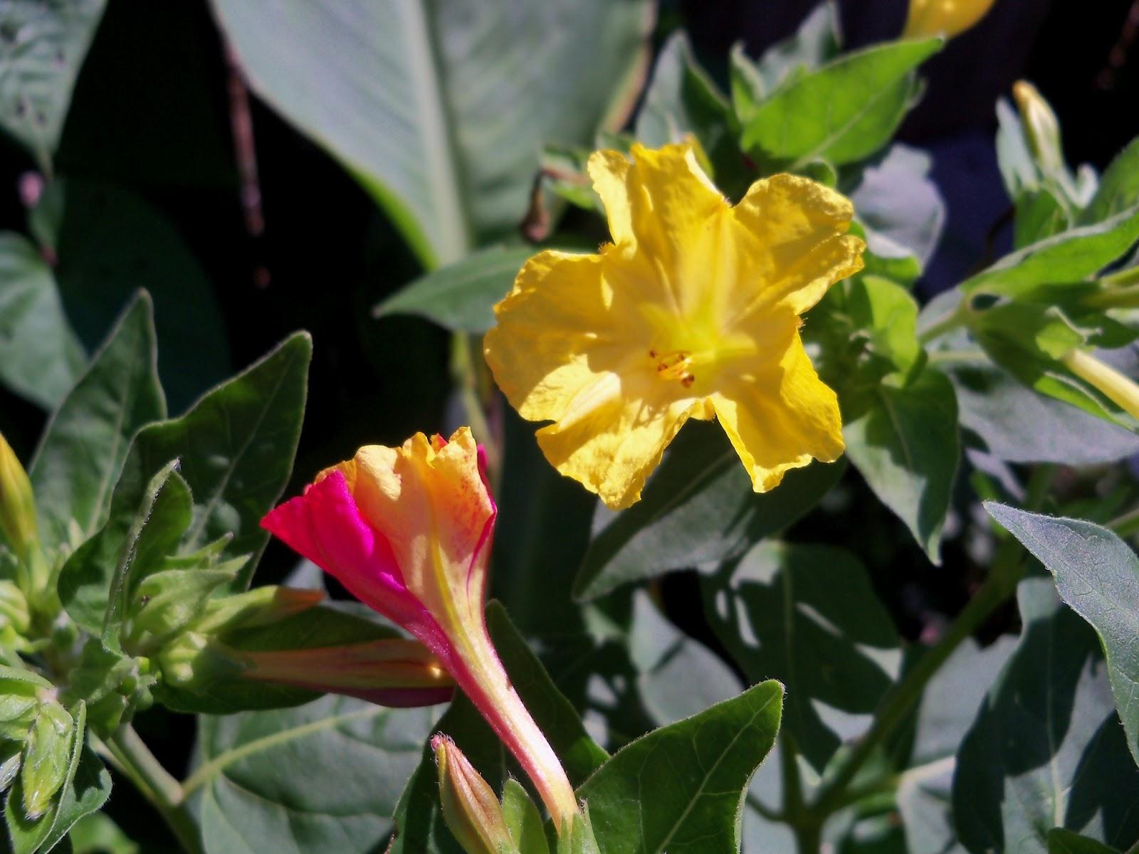 Gardening 2011 - 100_9113.JPG