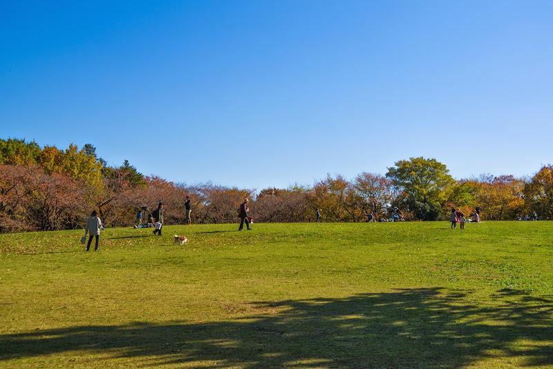 府中の森公園 紅葉 写真15