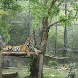 Zoo Snooze 2015 - IMG_7237.JPG