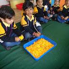 Introduction of Marigold Flower (Nursery) 12.02.2015