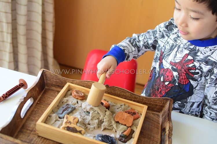 Learning About Fossils
