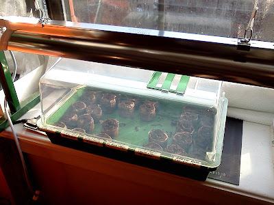 Bucolic Bushwick Seed Starting Setup