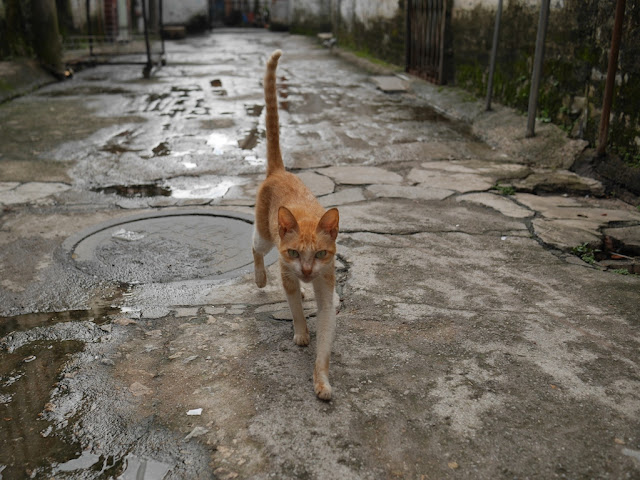 Cat walking in a Zhongshan alley