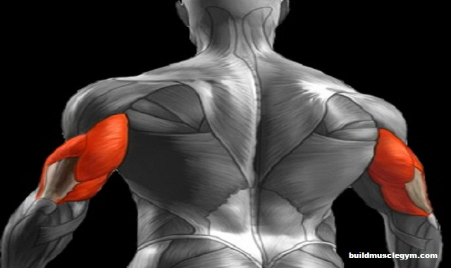 The Triceps Workout for Bigger Arms