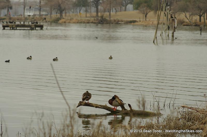01-26-13 White Rock Lake - IMGP4355.JPG