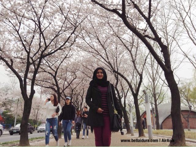 TAMAN SAKURA DI KOREA, Suseong Lake, Daegu,