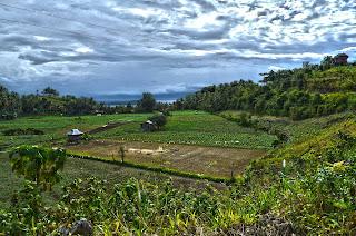 field2