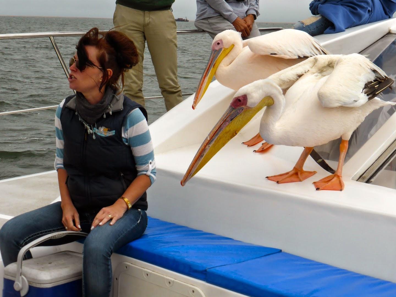 Twee ondeugende pelikanen tijdens de dolfin tour