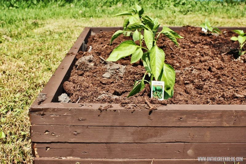 Raised Garden Bed | DIY garden beds