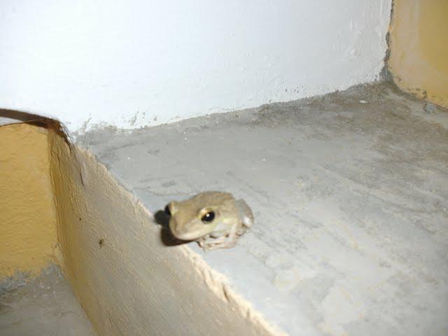 Bonaire 2011 - PICT0201.JPG