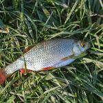 20150520_Fishing_Shpaniv_010.jpg