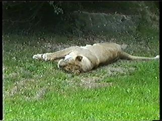2001.08.26-018 lionne