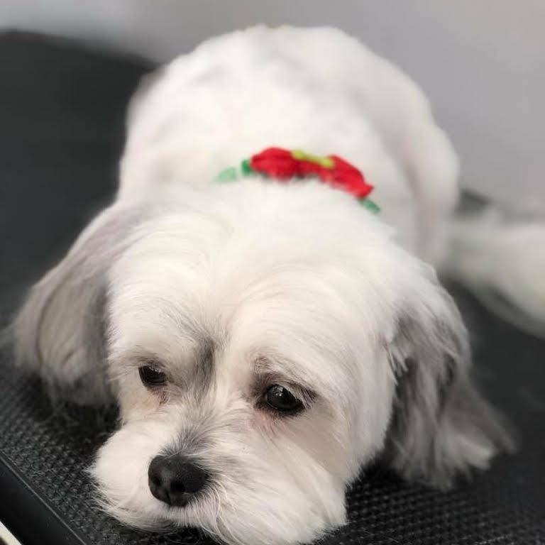 Puppy Love Pet Spa Pet Groomer In Buford