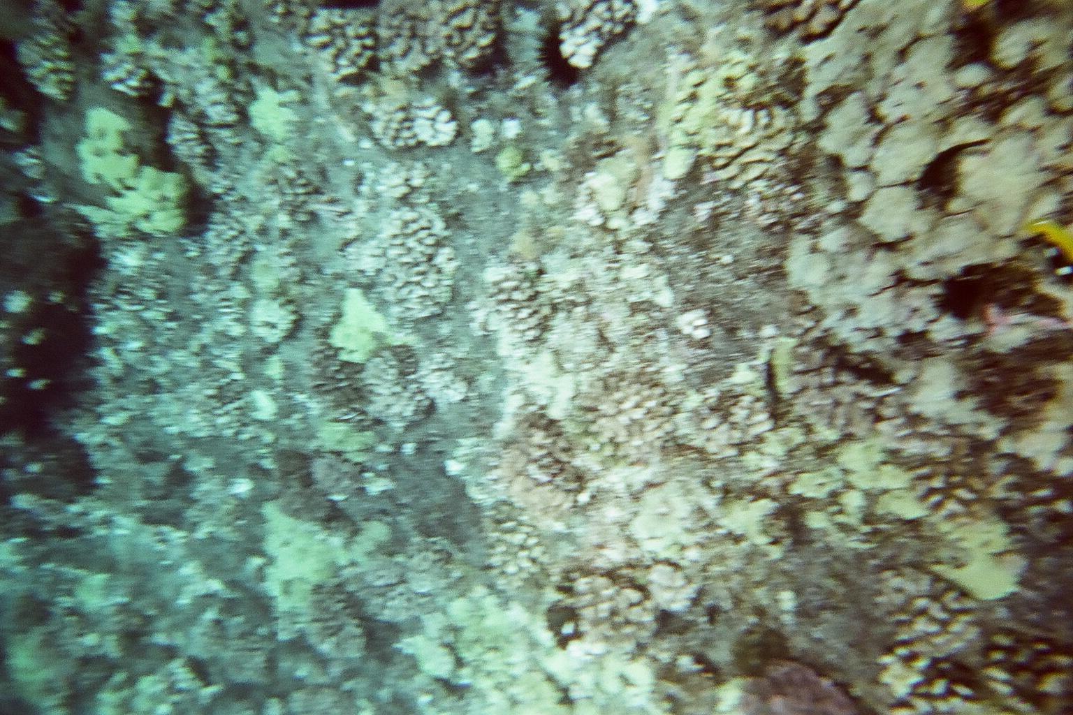 Hawaii Day 7 - 80540008.jpg