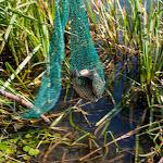 20140731_Fishing_Tuchyn_090.jpg