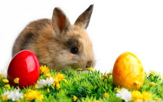 Uskrs besplatne pozadine za desktop 1440x900 slike čestitke blagdani jaja zec free download Happy Easter