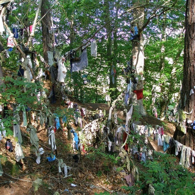 Clootie Wells: The Celtic Wishing Trees