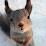 Lisa Pentz's profile photo