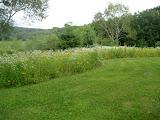 Adding a Meadow Edge