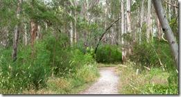 The Suburban Bush Track 1