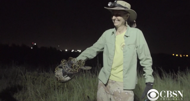 Screenshot from the CBS News documentary, 'Burmese Python Invasion: Fighting Invasive Species', showing Donna Kalil, a state-sanctioned python hunter in the Everglades area, holding a Burmese python. Photo: CBS News