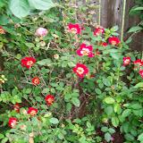 Gardening 2014 - 116_1501.JPG