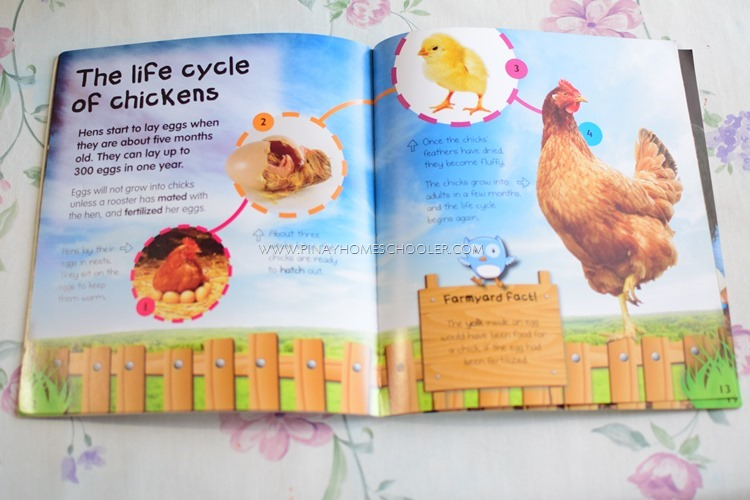 Life of a Chicken in a Farm Book