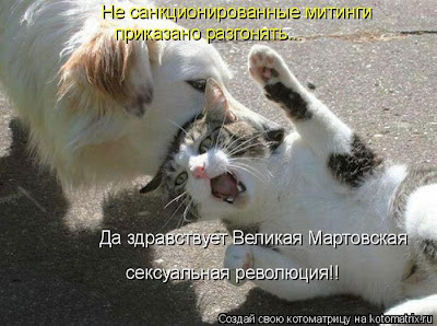 Сила кошачьей любви