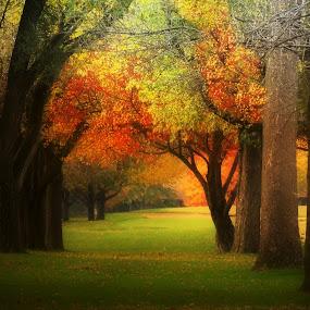 by T Sco - City,  Street & Park  City Parks ( park, nature, season,  )
