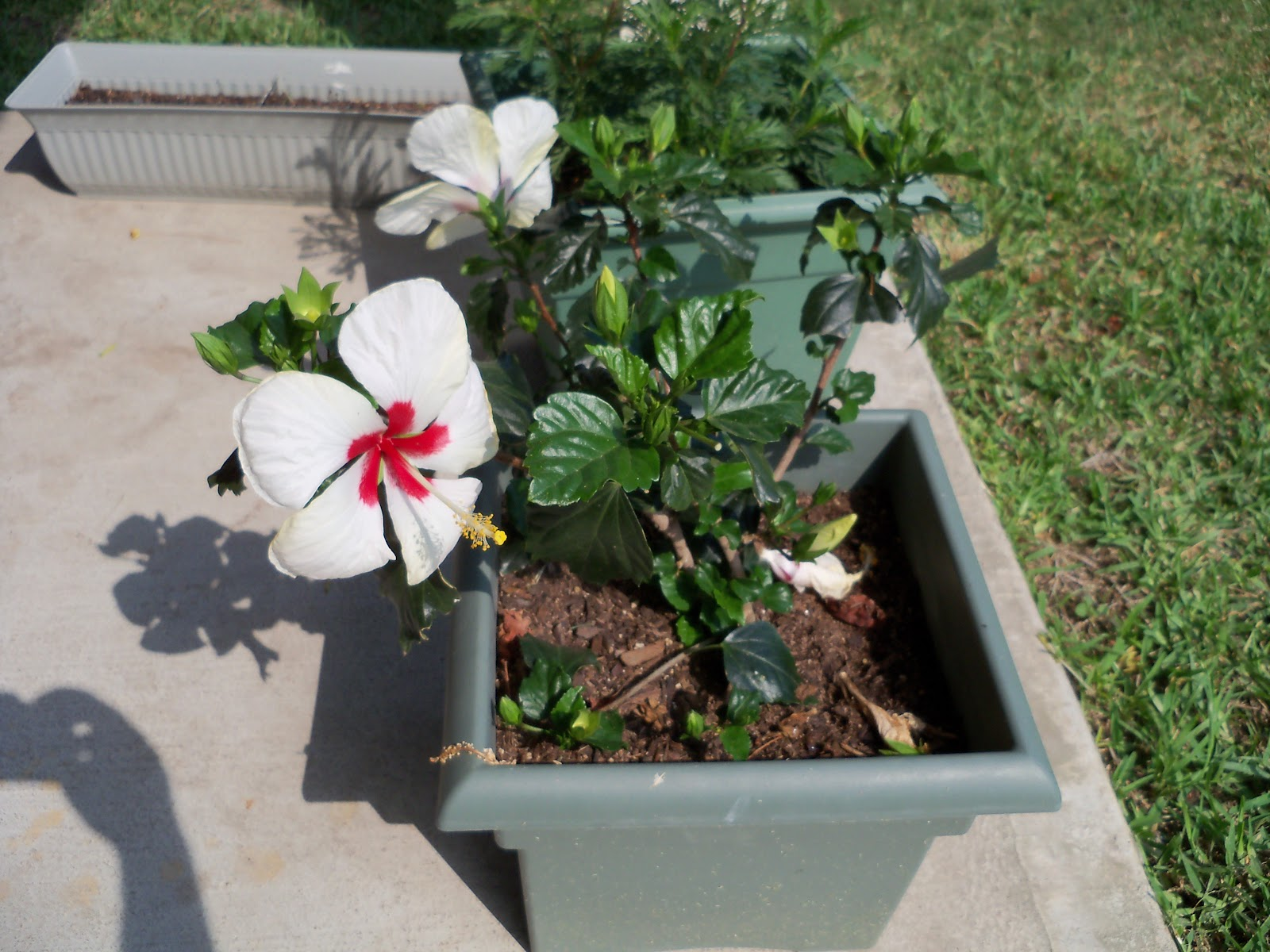 Gardening 2010, Part Two - 101_1954.JPG