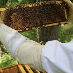 PLC Honey Fiesta 7/10/16 - IMG_3586.JPG